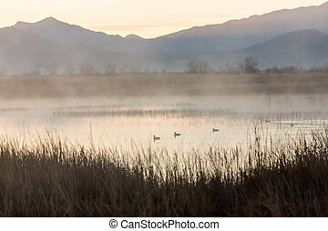 Early morning dawn scene over a foggy pond
