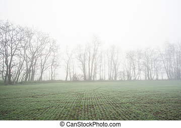 Early morning fog in fall in the field with tress