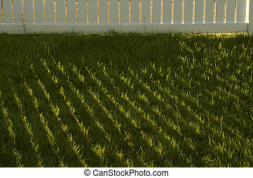 Early morning grass with fence shadows