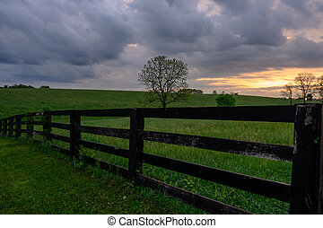 Early Morning Horse Fence