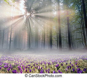 early morning in the ancient Bohr - Early autumn morning in ...