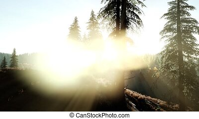 Early morning light and fog drifting through the trees