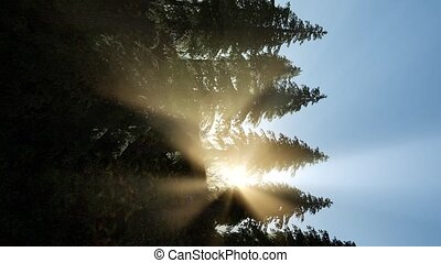 Early morning light and fog drifting through the trees....