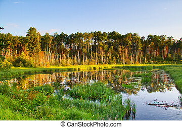 Early Morning Light on a Forest Lake