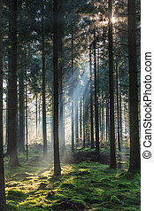 morning light shining through the trees in a forest - Early ...