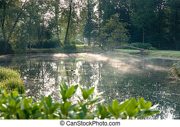 Early morning nature scene of pond and trees in park