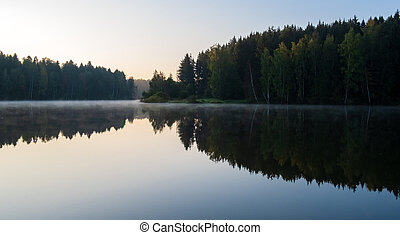 morning on the lake in the forest