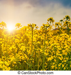 Early morning on the meadow, abstract natural backgrounds