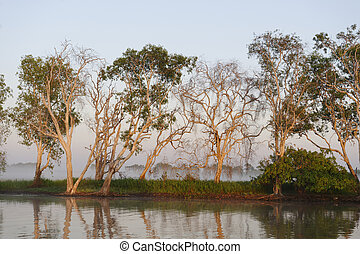 Early morning on the Yellow River, Australia