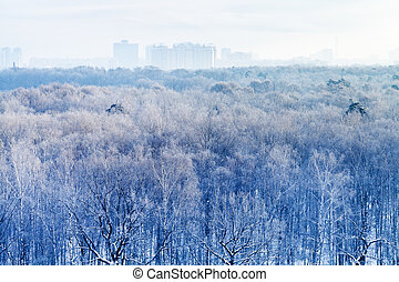 early morning over frozen urban park in winter