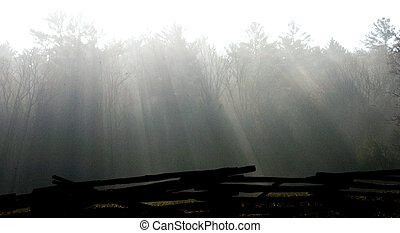 Crepuscular rays - Early morning sun streaming through dew...