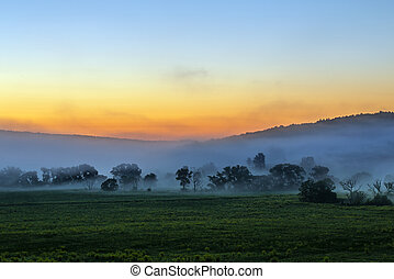 early morning sunrise landscape with bushes in fog near river at summer