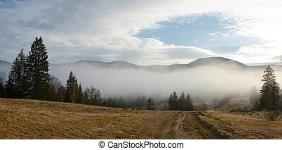 Early mountain spring forest in fog