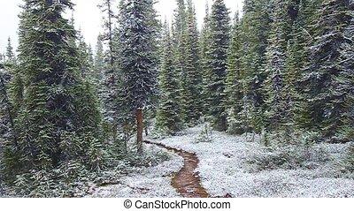 Early Snowfall Jasper National Park