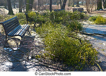 Early spring cleanings in park