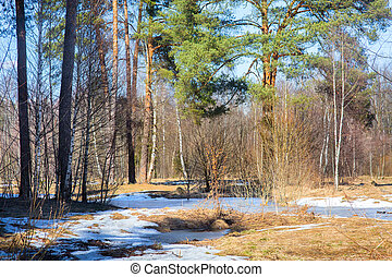 Early spring forest at march