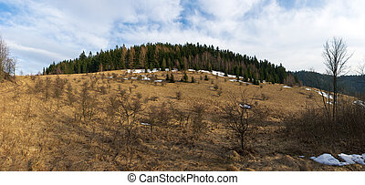 Early spring panorama with forest