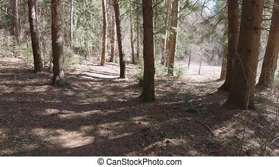 Early spring pine forest with dry grass and sandy road