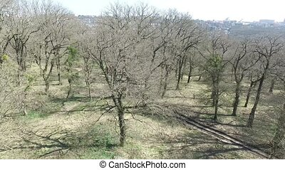 Early spring. Trees without leaves. Park of the city of...