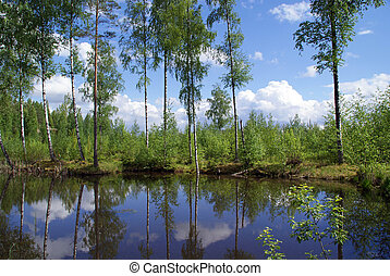 Early Summer Forest Lake Reflections