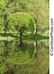 Early summer reflection - Early summer reflactions on a pond