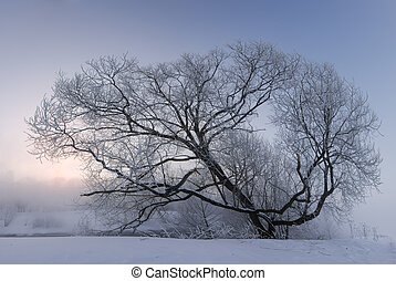 early sunrise over a large tree covered with hoar in a snowy field