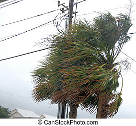 Hurricane Irene - Early winds of Hurricane Irene along North...