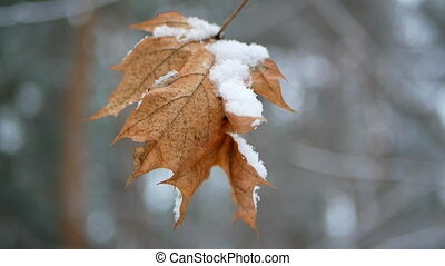 Early winte leaves first - Early winter, behind snow covered...