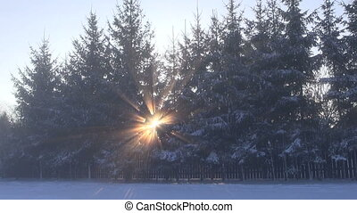 early winter morning sunlight