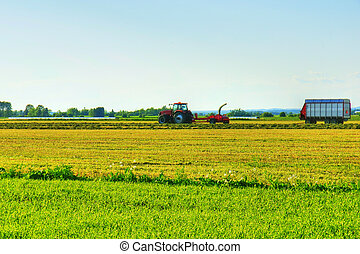Early work in the cereal field