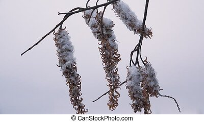 Earrings winter tree.