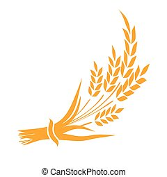 Ears and grains of wheat on a white background. Vector illustration.