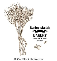 Ears of barley. Hand drawn cereal set. Bakery logo design. Vector illustration