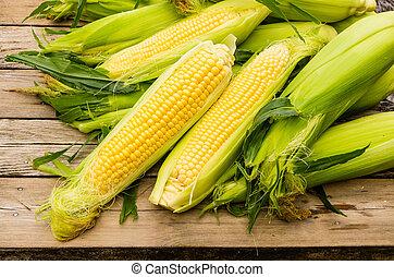 Ears of freshly harvested yellow sweet corn