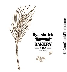 Ears of rye or wheat. Hand drawn cereal. Bakery vector illustration