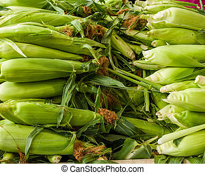 Ears of sweet corn at the market