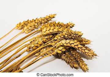 Ears of the grain
