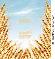 Ears of wheat background. Vector illustration.
