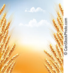 Ears of wheat background. Vector.