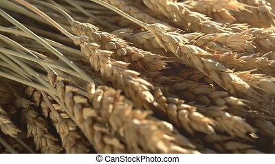 Ears of Wheat Grain and Flour