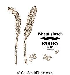 Ears of wheat. Hand drawn cereal set. Bakery logo design. Vector illustration