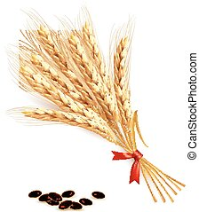 Ears of wheat.  illustration.