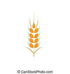 Ears of wheat in front of white background.