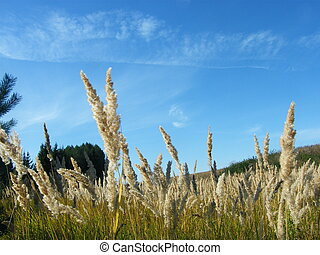 Ears of wheat in the forest