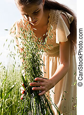 Ears of wheat in the hands of the hands of