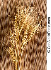 ears of wheat . macro