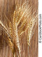 ears of wheat . macro