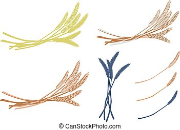 ears of wheat, objects on white background