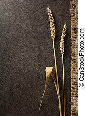 ears of wheat on black
