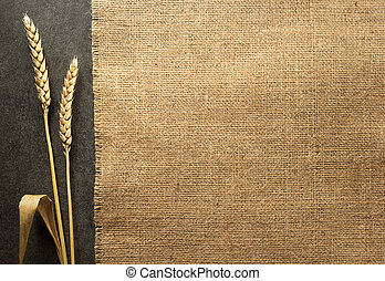 ears of wheat on black background